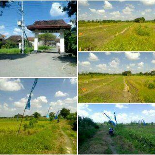 Foto: Jual Tanah Kaling Murah